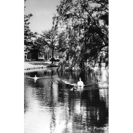 Ansichtkaart Tiel - Plantage